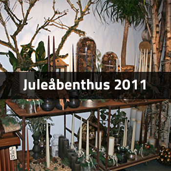 Juleåbenthus 2011 | Birthes Blomster
