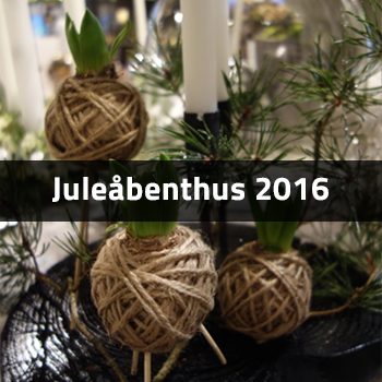 Juleåbenthus 2016 | Birthes Blomster