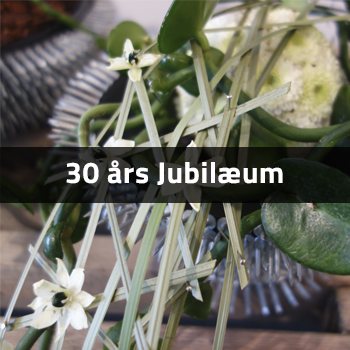30 års jubilærum | Birthes Blomster